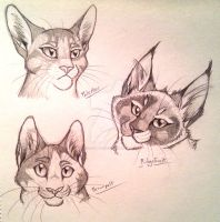 Pale - Brown - Ridge Sketches by CaptainMorwen