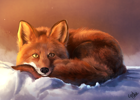 Fox by HintoArt