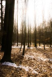 Forest of frost by Dragoroth-stock