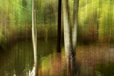 Mystical Forest - 1 by explicitly