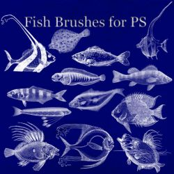 Fish Brushes for PS by BohemianResources