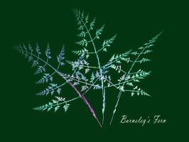 Barnsley's fern by duf20