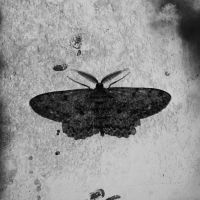 Moth by Caillean-Photography