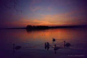 Swanlake romantic by MT-Photografien