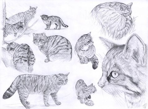 Scottish Wild Cats by JaniceDuke