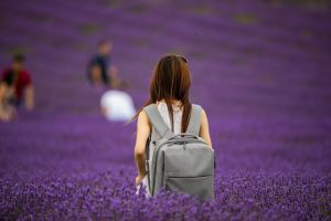 Lavender Fields Forever (1) by Mincingyoda