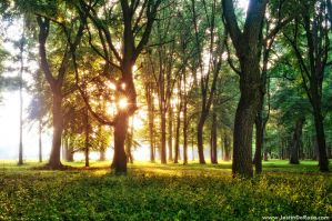 The Whispering Forest by JustinDeRosa