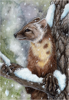 Pine Marten Card by Sidonie