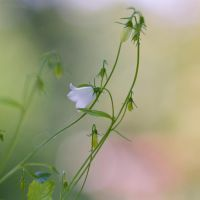 The soft feeling of nature by Pamba