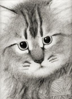 Kitty Pencil Drawing by asynjur
