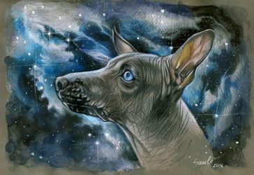 Space Xolo by DrunkenUnicorn