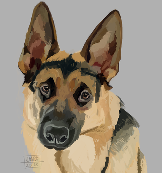 German Shep Bab by jjynqx