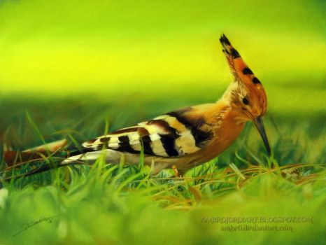Hoopoe by AmBr0