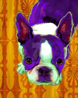 Boston Terrier by artpaw