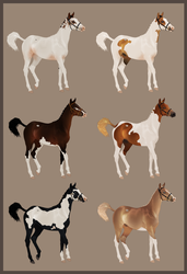 Closed Yearling Adopts - Paints by Lone-Onyx-Stardust