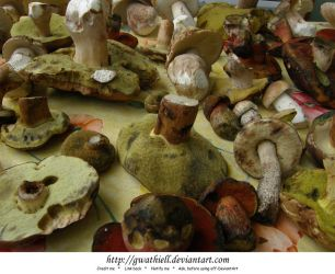 Mushrooms - Plenty by Gwathiell