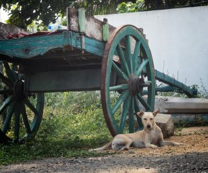 Antique cart with dog. by jennystokes
