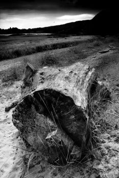 MonoTimber1 by Coigach