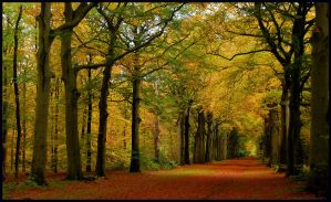 On a broad autumnal lane by jchanders