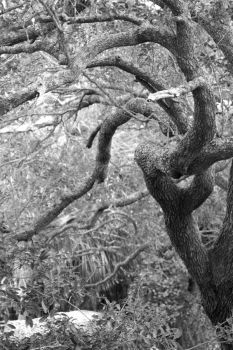 Crooked Limbs by ArstyRev