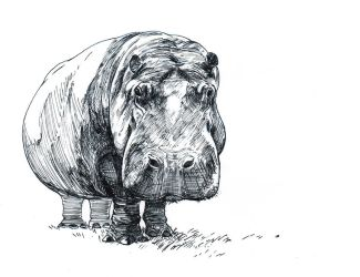 Hippo--Ink by artofMilica