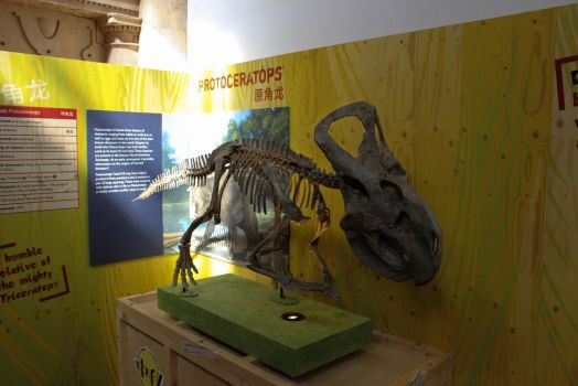 Dinosaurs of China - Nottingham 3 by solair