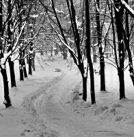 Winter path by starykocur
