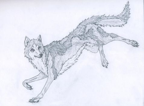 Wolf by TheAmberMoon