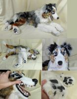Lifesize Australian Shepherd Plush by WhittyKitty