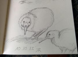 daily drawing challenge day 36: Kiwi by Chayt