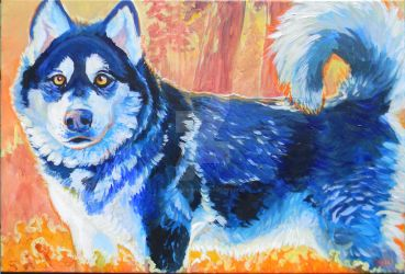 Pet Portrait Malamute by jupiterjenny