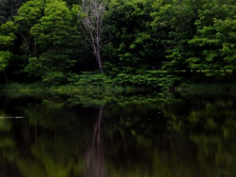 Emerald reflection by Melusine8
