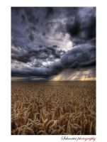 the rain is coming by matze-end