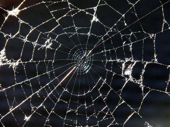 a tangled web by eRiQ