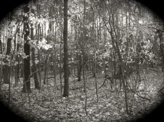 Worcester Woods 4 by scarygirl67