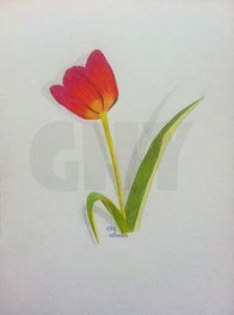 Tulip by Ghiny