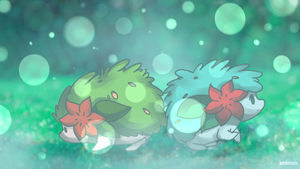 Day 718 A - Shaymin (Land Forme)