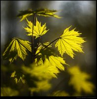 Live Leaves by manroms