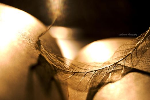 Tattered by Floreina-Photography