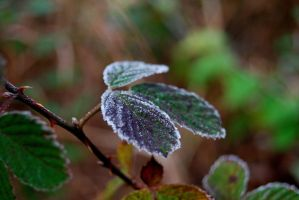 Frost: Blackberry Leaves by Wyrdhaven