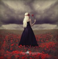 Field Of Roses by KarinaAlbuquerque