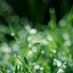Dew II by andotsiry