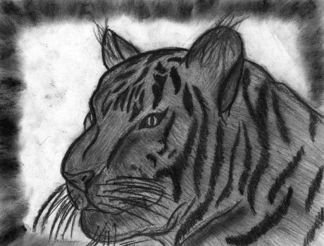 Charcoal Tiger by Fire-Blitz