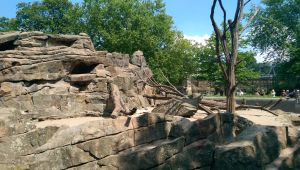 Beauty of Rocks - Berlin Zoo by casper033