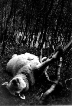 Behold the Lamb of God... by khold