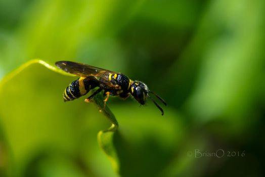 Small Bee 2 by AirForce509th