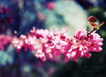 See the End - Spring 2013 by koshadesing