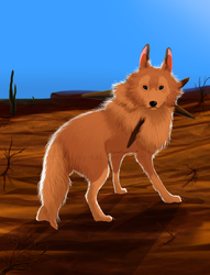 Solitary wolf by Ky-KAI