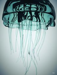 Jellyfish by Skybase