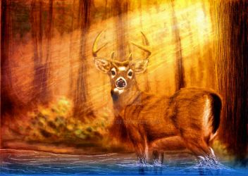 forest whitetail by twinket